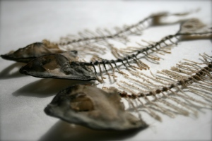 Silk and cotton fish skeletons