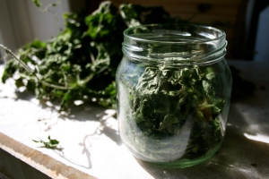 Place a handful of dried nettle leaves in a jar.