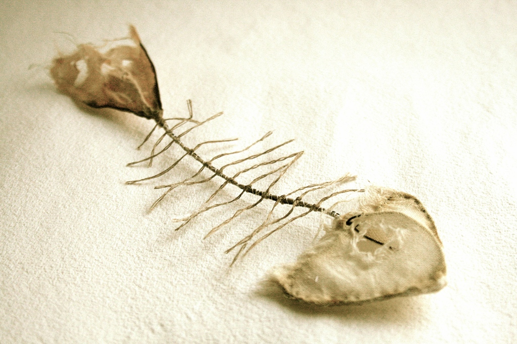 Cotton Fish skeleton